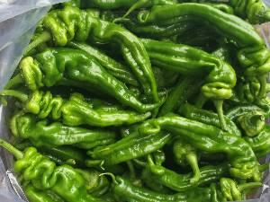纯绿色大棚种植螺丝椒,现有大量现货,求采购