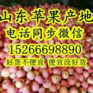红富士苹果批发价格15266698890