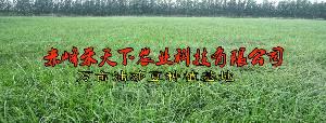 赤峰禾天下萬畝油莎豆種植基地