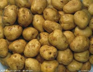 新土豆大量出售欢迎咨询个大皮薄适合各大企事业单位食堂使用