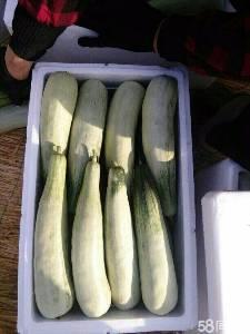 山東濰坊水果蘿卜產地行情好價格便宜了