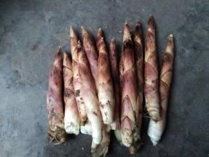 供应鲜笋,无公害bwin china,经过认证了的
